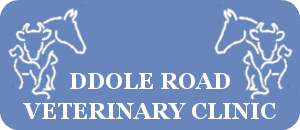 Ddole Road Veterinary Clinic logo image